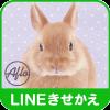 うさぎ ウサギ 可愛い かわいい 写真